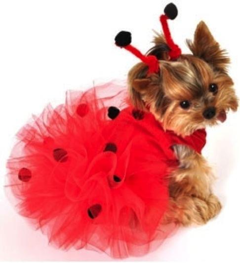 lady bug dog costume