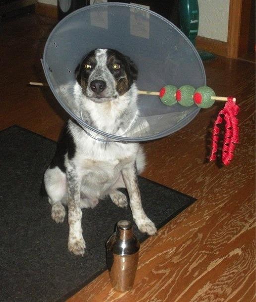 martini dog costume