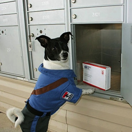 postal worker dog costume
