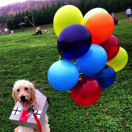 up dog costume